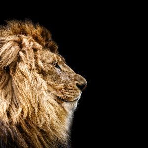 The King Within - Embodied Masculine Workshop